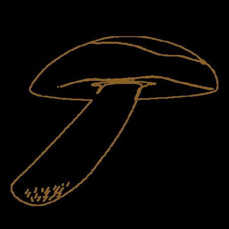 Austernpilz (Pleurotus)